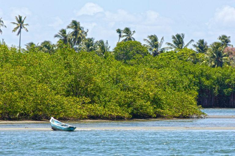 Feature Image: Barra Nova: conheça a localidade e os seus atrativos